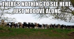 moooovealong